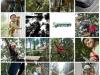 collage_seikkailupuisto