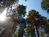 seikkailupuisto-jounikallio-edit-esimerkki
